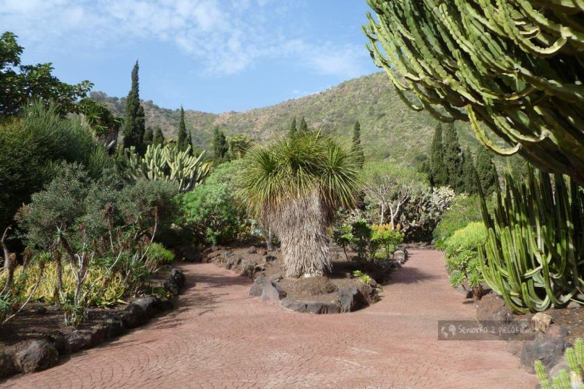 Gran Canaria - ogród botaniczny