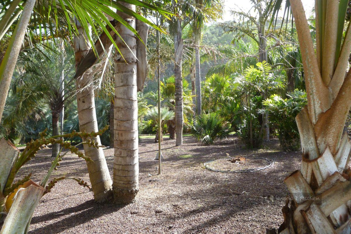 Ogród Kanaryjski