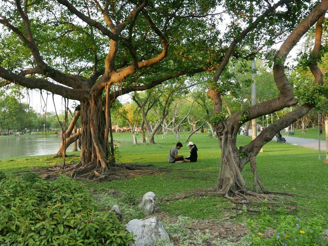 W poszukiwaniu zieleni w Bangkoku
