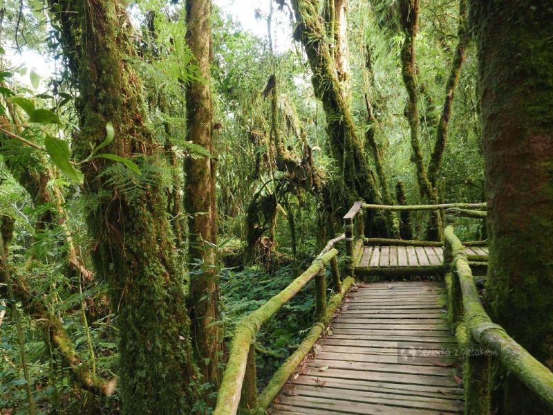 Wycieczka do Parku Narodowego Doi Inthanon