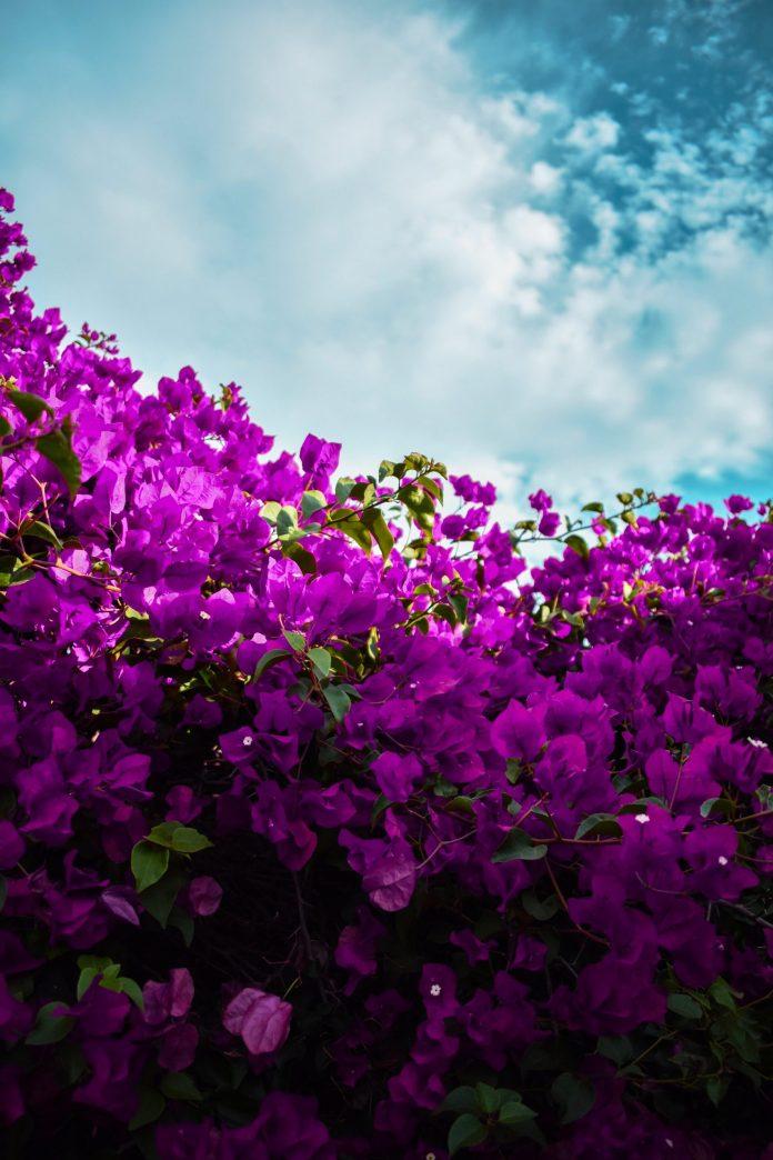 Seniors Lifestyle Magazine Talks To Epilepsy: Purple Day
