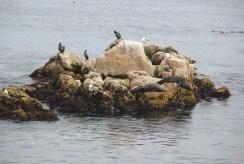 Monterey Bay 2