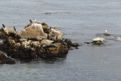 Monterey Bay (2)