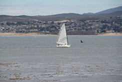 Monterey Bay (4)
