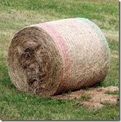 baled hay cylinders 8-1-2015 5-53-55 AM 2593x2601