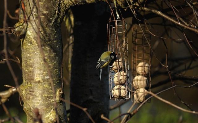 bird-1050032_1280