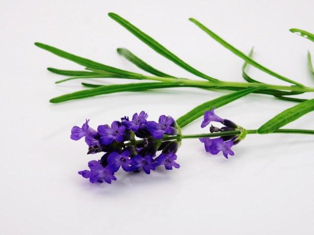 lavender-1573008_1280