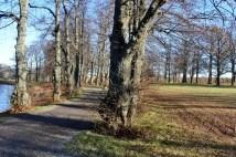 Gamla träd vid fina promenadvägar