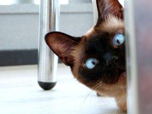eyes, cat, feline