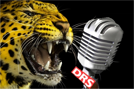 locarno pardo microphone