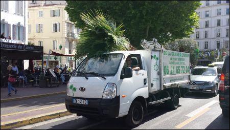 Die Palmen werden angeliefert in Cannes © sennhauser