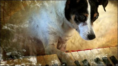 'Heart of a Dog' von Laurie Anderson © Filmcoopi