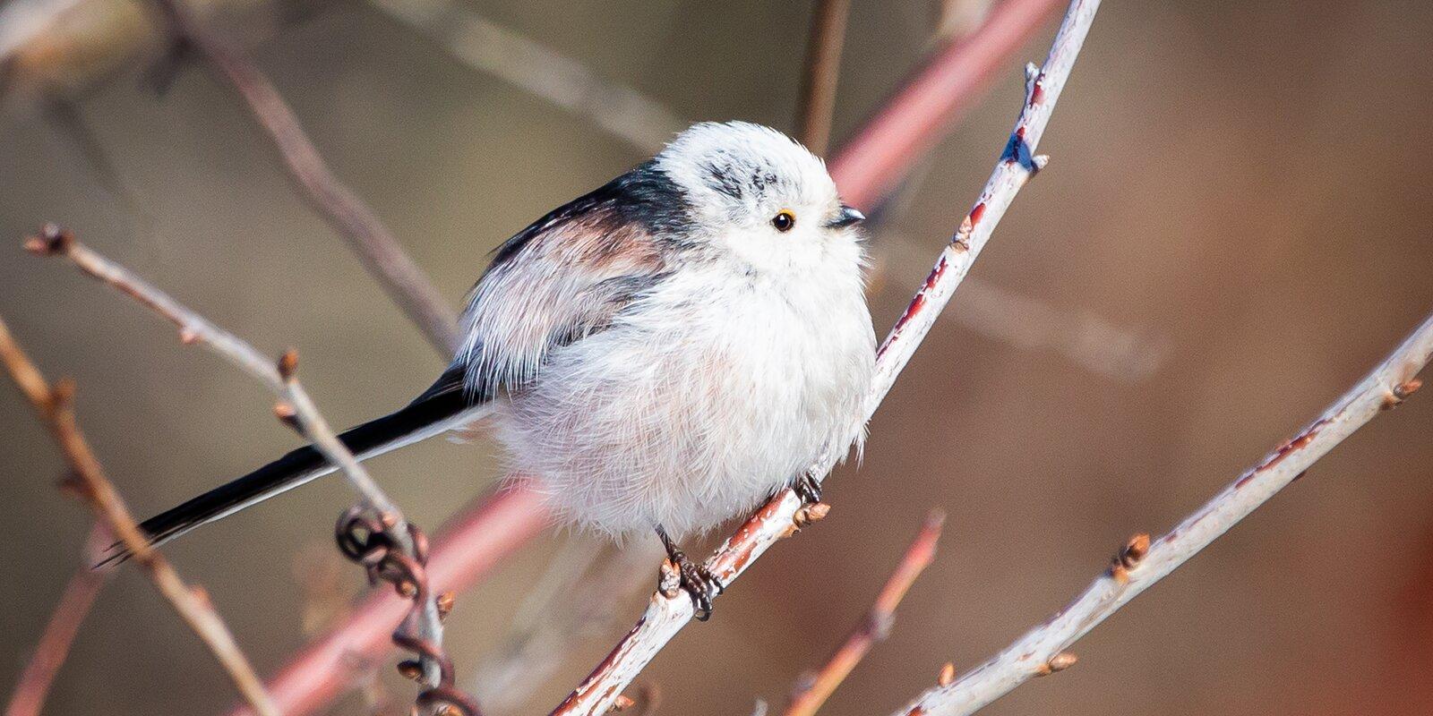 Ополовник и пустельга: каких редких птиц обнаружили в столице в этом году