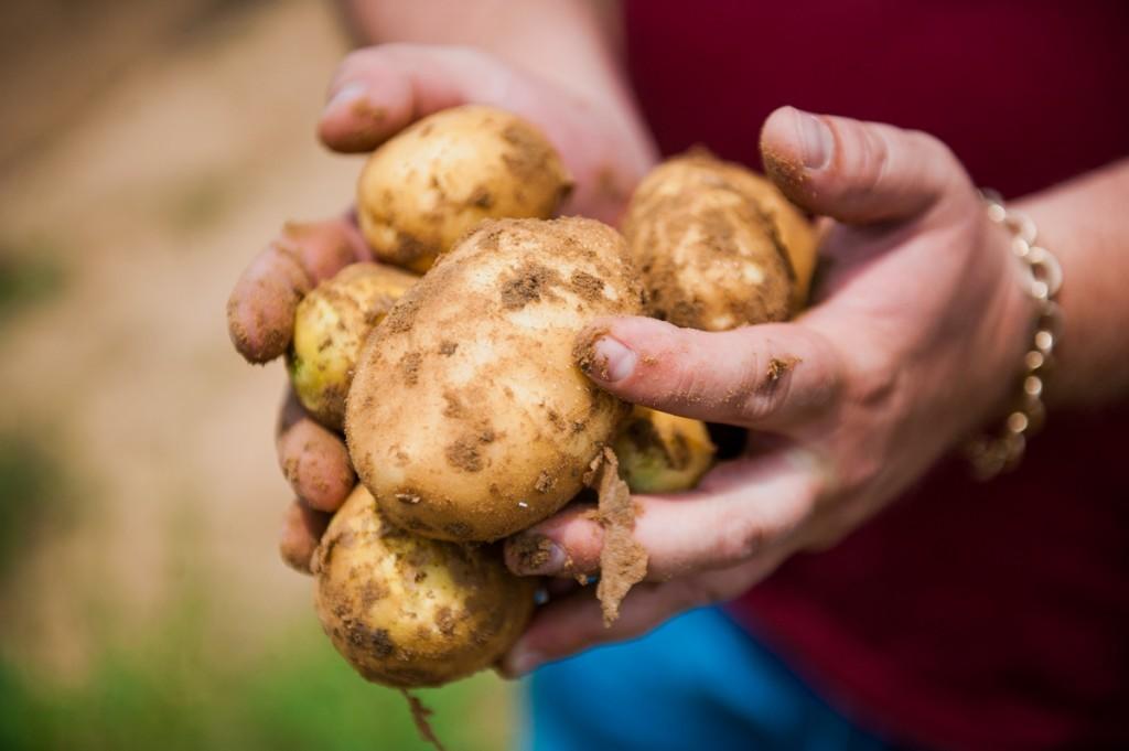 Отечественный рынок теперь дополнят чипсы и фри из астраханского картофеля