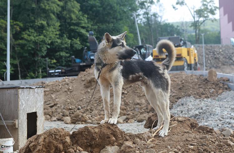 В Приморском крае построят питомники для бездомных животных