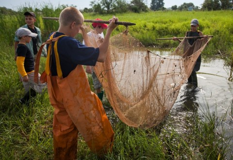 Астраханские школьники спасают популяцию рыбы