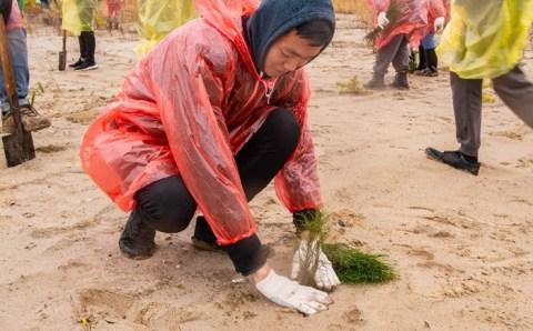 Десятки тысяч сеянцев сосны посадили в Якутском лесничестве