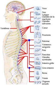 Iridologie et systeme nerveux