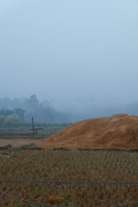 Foggy morning over the fields in the village we worked in