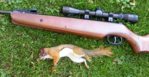 Hunting with a pellet rifle