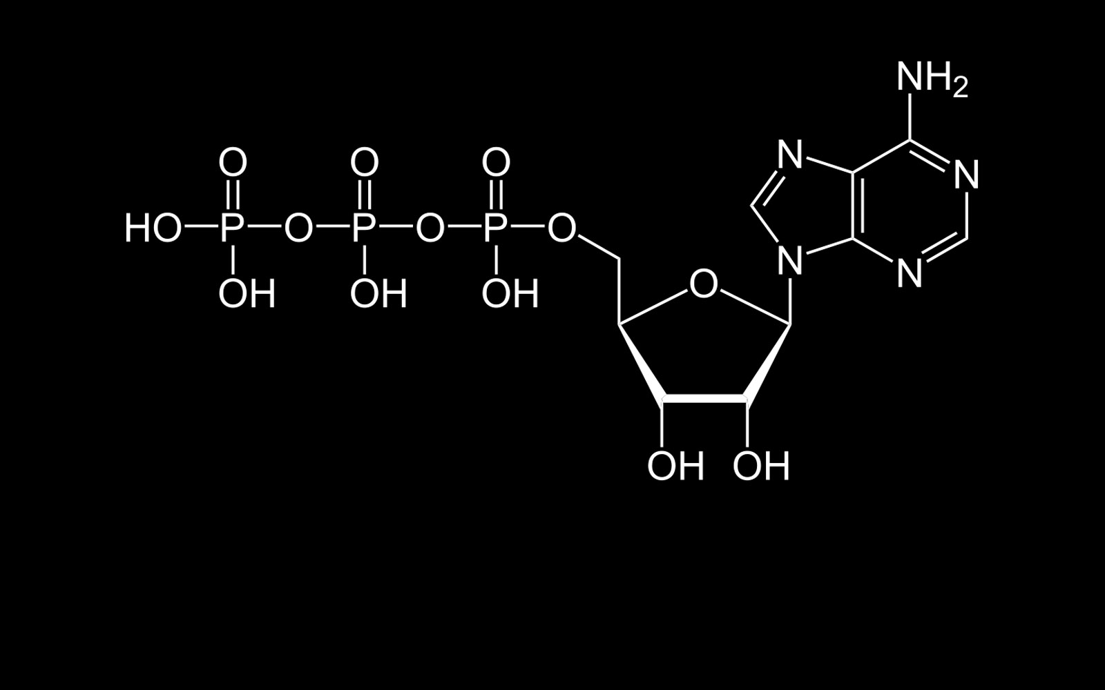 hight resolution of a diagram representing the simplified chemical structure of the adenosine triphosphate molecule atp