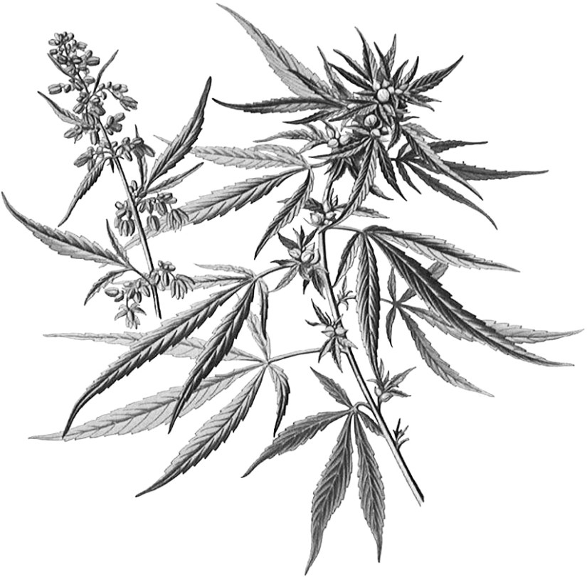 Cannabinoids – what are they and what do they do?