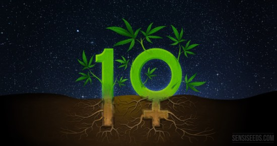 10 interesting facts about feminized seeds - Sensi Seeds Blog