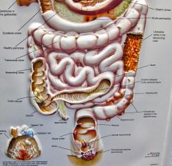 CBD kann zur Behandlung diverser Erkrankungen des Magen-Darm-Trakts beitragen, u.a. von Morbus Crohn, Colitis sowie weiterer Formen chronisch-entzündlicher Darmerkrankungen (IBD) (© ex_magician)