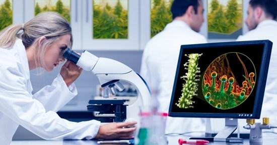 10 milestones in medicinal cannabis FB 0.2