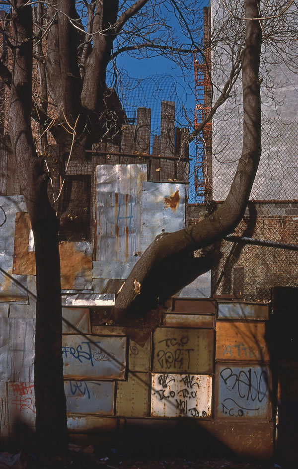 Limb, E. 10th St., Ave. B & C, 1980, photograph by Philip Pocock