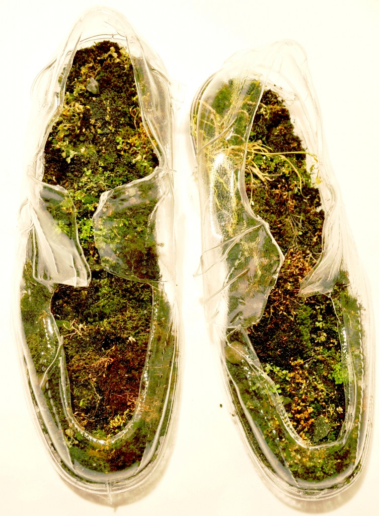 mossshoes