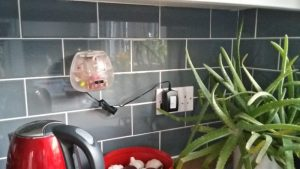 Sensor box fitted onto the kitchen wall in volunteer household