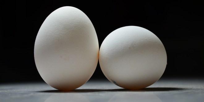 eggs-1289223_960_720