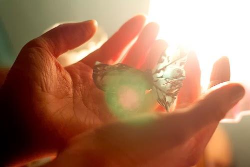 borboleta luz