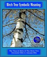 birch tree meaning