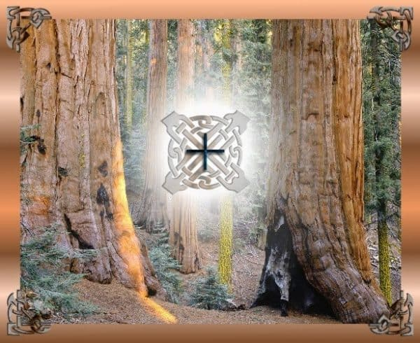 Elm Tree Symbol And Meaning