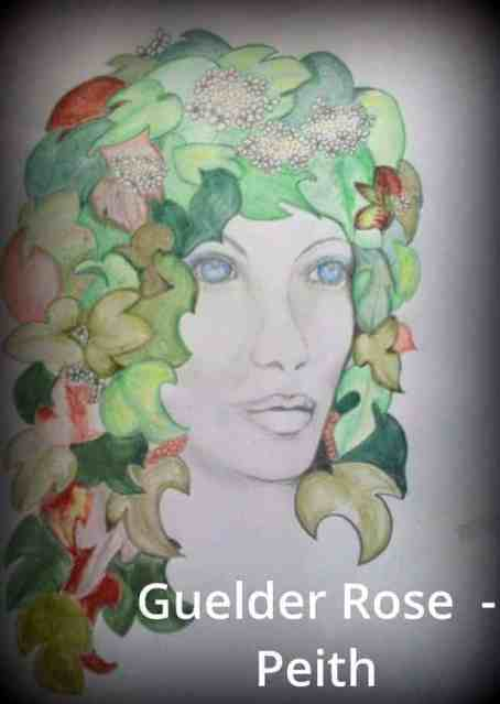Guelder Rose Meaning