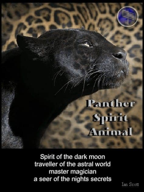 panther meaning