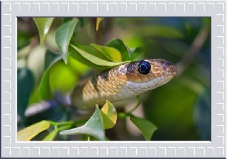 Animal Spirit guide Snake