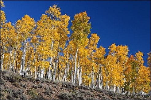 Aspen tree Meditation music
