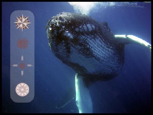 whale totem medicine