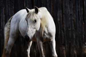 horse animal totem