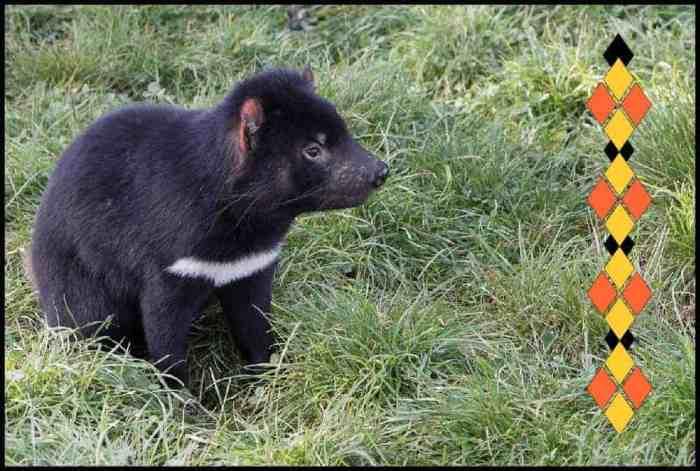 Tasmanian devil meaning