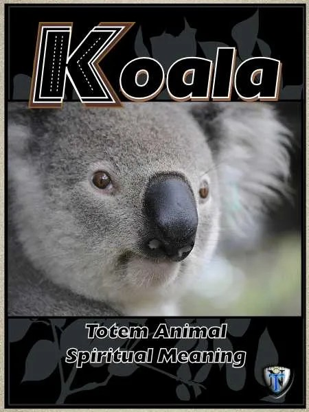 koala spiritual meaning