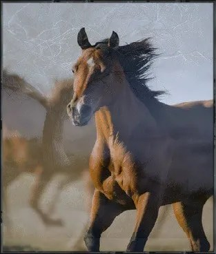 horse spirit animal totem