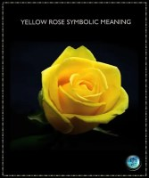 yellow rose spiritual meaning