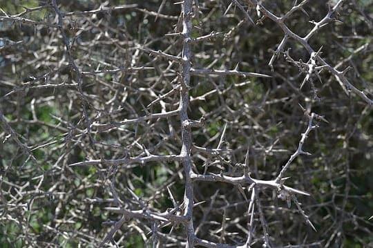blackthorn tree spiritual meaning