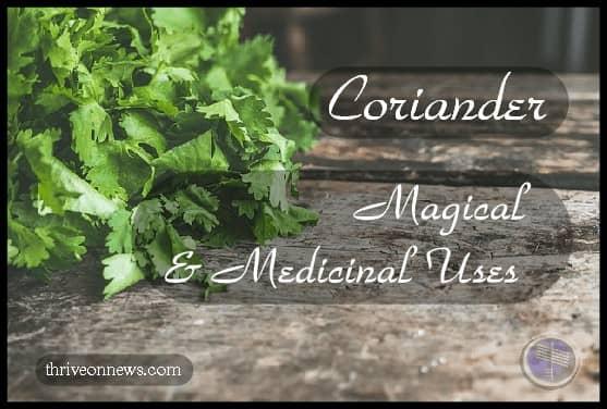 coriander spiritual meaning