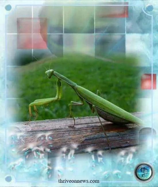 Grasshopper spirit animal meaning