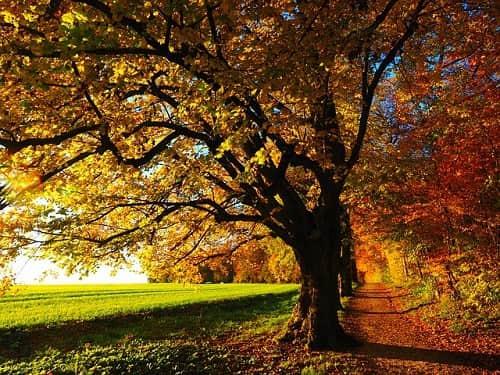 autumn equinox meaning